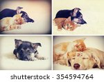 Stock photo kitten and puppy 354594764