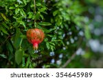 red ripe pomegranates on the... | Shutterstock . vector #354645989