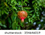 red ripe pomegranates on the... | Shutterstock . vector #354646019