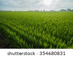 Green Rice Fields In Sungai...