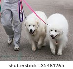 two great pyenees dogs - stock photo