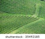 wine field - stock photo