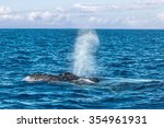 humpback whale spout in maui   Shutterstock . vector #354961931