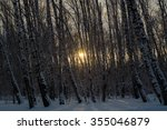 sunset in the wood between the... | Shutterstock . vector #355046879