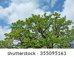 Crowd Of Oak Tree On Cloudy...