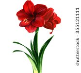 Red Amaryllis Flower ...