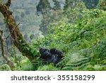 dominant male mountain gorilla...   Shutterstock . vector #355158299