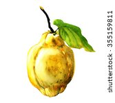 quince fruit  with leaf... | Shutterstock . vector #355159811