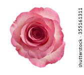 Stock photo gentle pink rose flower isolated on white background 355161311