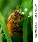 Small photo of Close Up view of an injured wingless bee