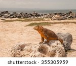Mustard Coloured Iguana Perche...