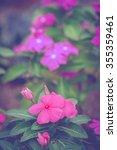 Small photo of Madagascar periwinkle, Madagascar periwinkle, Catharanthus roseus, Vinca flower, Vintage Style.