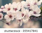 Beautiful Cherry Blossom ...