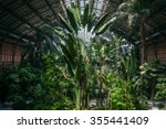 Tropical Forest With Different...