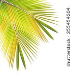 Dry Coconut Leaf Isolated On...