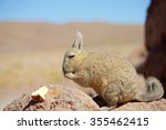 Small photo of Viscacha rabbit Bolivia