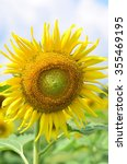 sunflower the yellow colour is...   Shutterstock . vector #355469195