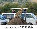 Family Cheetah Masai Mara...