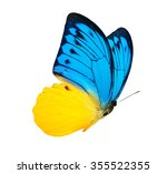 Stock photo color butterfly isolated on white 355522355