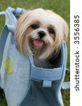 adorable lhasa apso dog in carrier - stock photo