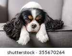 Portrait Of Cute Cavalier...