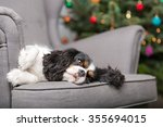Cute Dog Relaxing On The...