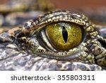 Alligator Or Crocodile Eye...