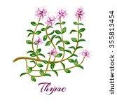flowering thyme. thyme herb.... | Shutterstock .eps vector #355813454