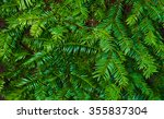 yew branch  green nature... | Shutterstock . vector #355837304