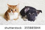 Stock photo kitten and puppy 355885844