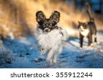 Stock photo papillon dog running in winter with a walking cat on the background 355912244