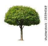 Single Cherry Tree Isolated On...