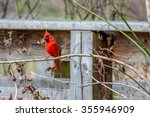 Small photo of A Bright Red Male Cardinal Bird in a Tree (Cardinalidae) in the Woods of Brazos Bend, Texas.
