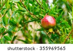 pomegranate on a branch against ... | Shutterstock . vector #355969565