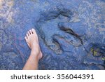 dinosaur footprint and human... | Shutterstock . vector #356044391