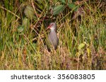 water rail | Shutterstock . vector #356083805