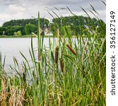 Overgrown Reeds On The Shore O...