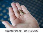 lizard on boy's hand | Shutterstock . vector #35612905