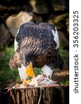 eastern eagle close up | Shutterstock . vector #356203325
