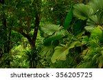 rainforest near cairns  north... | Shutterstock . vector #356205725