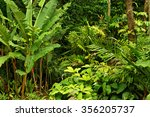 rainforest near cairns  north... | Shutterstock . vector #356205737