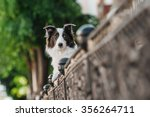 border collie is hiding behind... | Shutterstock . vector #356264711