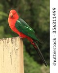 Small photo of Side profile of a male King Parrot (Alisterus scapularis), a native Australian bird, perched on a wooden post.