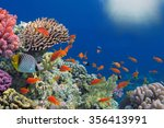 Tropical Fish On Coral Reef In...
