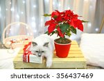 Cat And Christmas Flower...