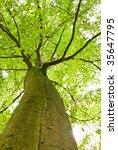 lush green tree top shot from...   Shutterstock . vector #35647795