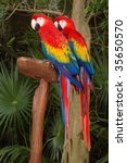 mexican parrots | Shutterstock . vector #35650570