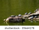 Turtles Taking A Sunbath On Rock