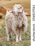 sheep. | Shutterstock . vector #356819561