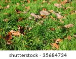 Grass Texture With Leaves In...